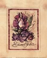 Vintage Sweet Pea  Fine Art Print