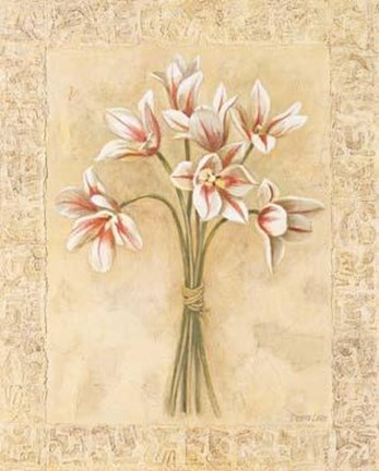 Framed White Striped Tulips Print