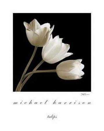 Three Tulips by Michael Harrison art print