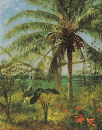 Framed Palm Tree, Nassau 1892 Print