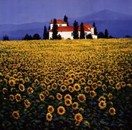 Sunflowers Field Art