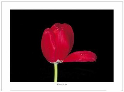 Framed Red Tulip, 2000 Print