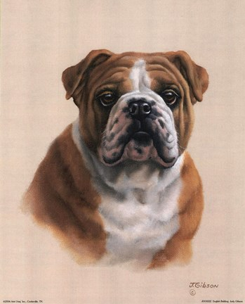 Framed English Bulldog Print