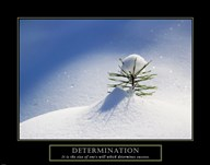 Determination - Little Pine