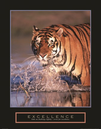 Framed Excellence - Bengal Tiger Print