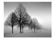 Winter Trees III  Fine Art Print