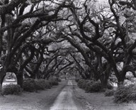 Path In The Oaks #2, Louisiana Art