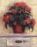 Begonias  Fine Art Print