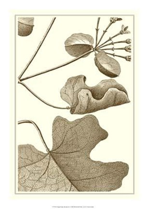 Framed Cropped Sepia Botanical I Print