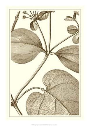 Framed Cropped Sepia Botanical V Print