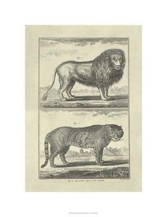 Framed Lion Tiger Print