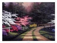 Dogwood Road  Fine Art Print