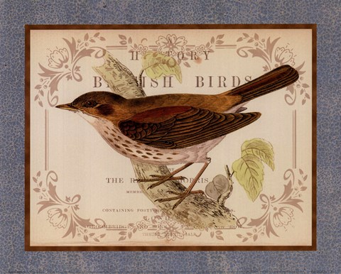 Framed British Birds II Print