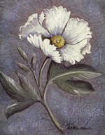 White Poppy