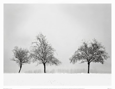 Framed Silhouettes Of Winter II Print