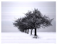 Winter Tree Line I
