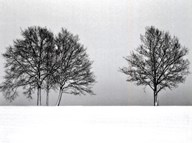 Winter Tree Line II