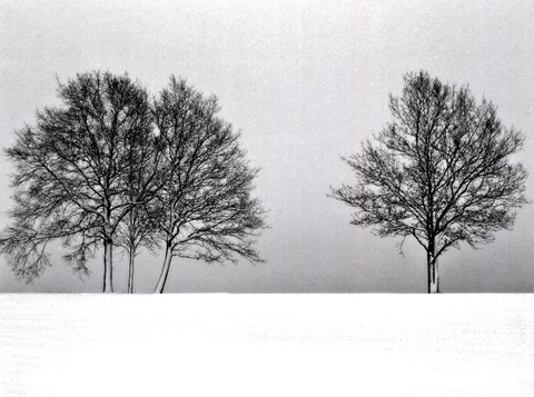 Framed Winter Tree Line II Print