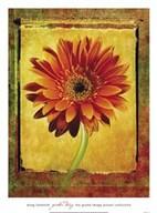 Gerber Daisy  Fine Art Print