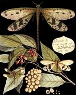 Whimsical Dragonflies On Black I  Fine Art Print