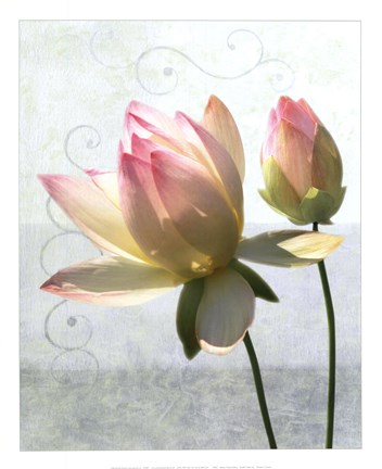 Framed Double Water Lily Print