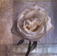 Modern Rose I  Fine Art Print