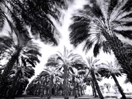 Spinning Palms  Fine Art Print