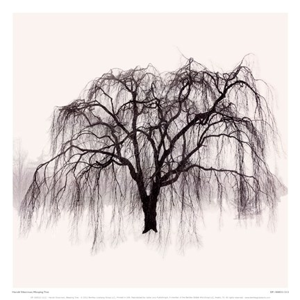 Framed Weeping Tree Print