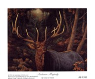 Crista Forest - Autumn Majesty Size 5x4