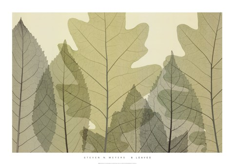 Framed 6 Leaves Print