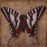 Butterfly I  Fine Art Print