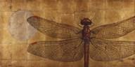Dragonfly On Gold  Fine Art Print