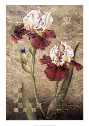 Framed Grand Irises Print