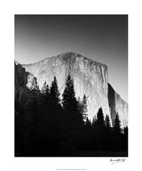 El Capitan In Trees Art