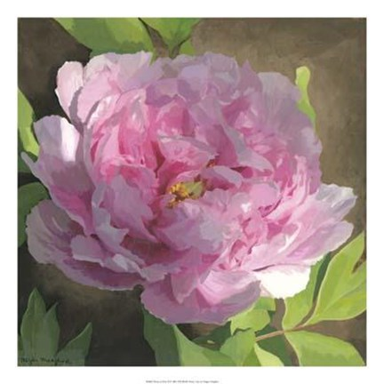 Framed Peony In Pink II Print