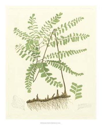Framed Eaton Ferns II Print
