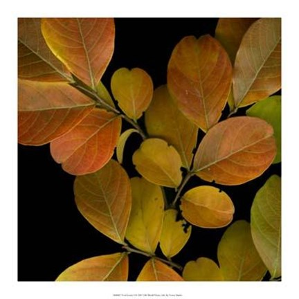 Framed Vivid Leaves I Print