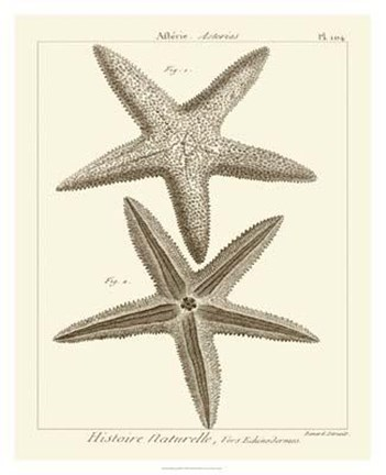 Framed Striking Starfish I Print