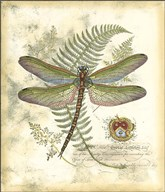 Mini Regal Dragonfly I