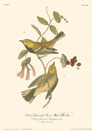 Black-Throated Green Wood Warbler Art