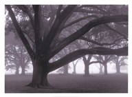 Oak Grove in Fog Art