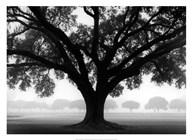 Silhouette Oak Art