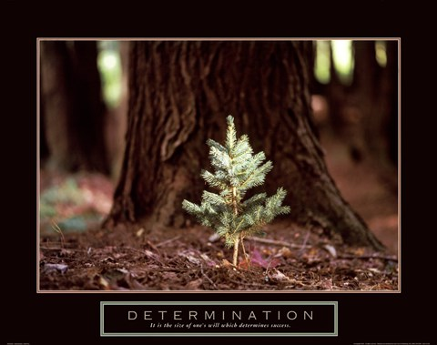 Framed Determination – Little Pine Print