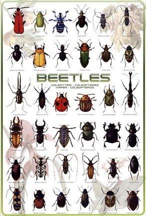 Framed Beetles Print