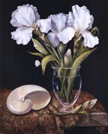 White Iris with Shell  Fine Art Print