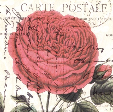 Framed Carte Postale Rose IV Print