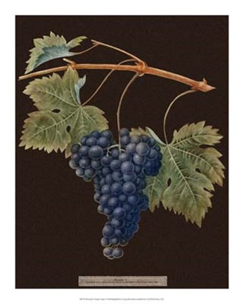 Framed Purple Grapes Print