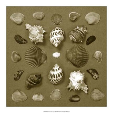 Framed Shell Collector Series VI Print