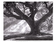 Andrew Oak, Afternoon Light  Fine Art Print