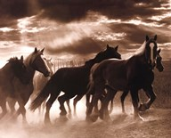 Running Horses & Sunbeams Art